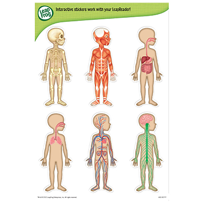 LEAP READER LEARN THROUGH READING – HUMAN BODY CHART | Crest Toys